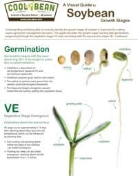 A Visual Guide to Soybean Growth Stages
