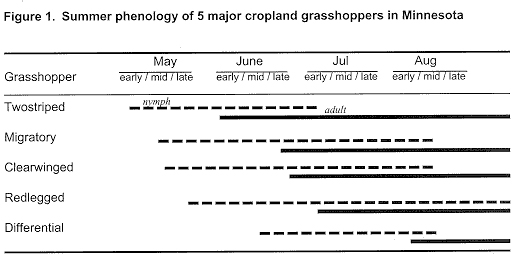 Summer phenology of 5 major cropland grasshoppers in Minnesota