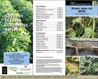 Not Sure Which Disease is Affecting Your Soybeans? Try the New Soybean Disease Diagnostic Cards